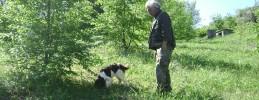 maple and saffron abruzzo tours truffle hunting