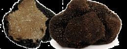 mapleandsaffron abruzzo tous truffle hunting
